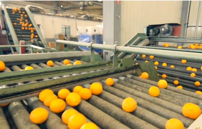 Μεγάλη έλλειψη πορτοκαλιών στην Λακωνία