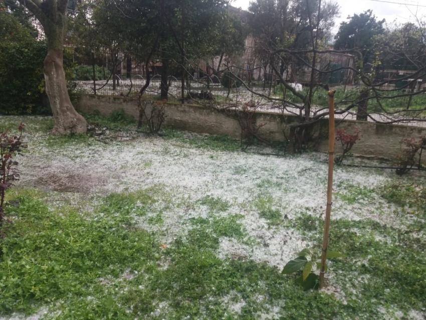 Ερώτηση κατέθεσε το KKE για τις καταστροφές στις καλλιέργειες από χαλαζόπτωση και παγετό στην Πελοπόννησο .