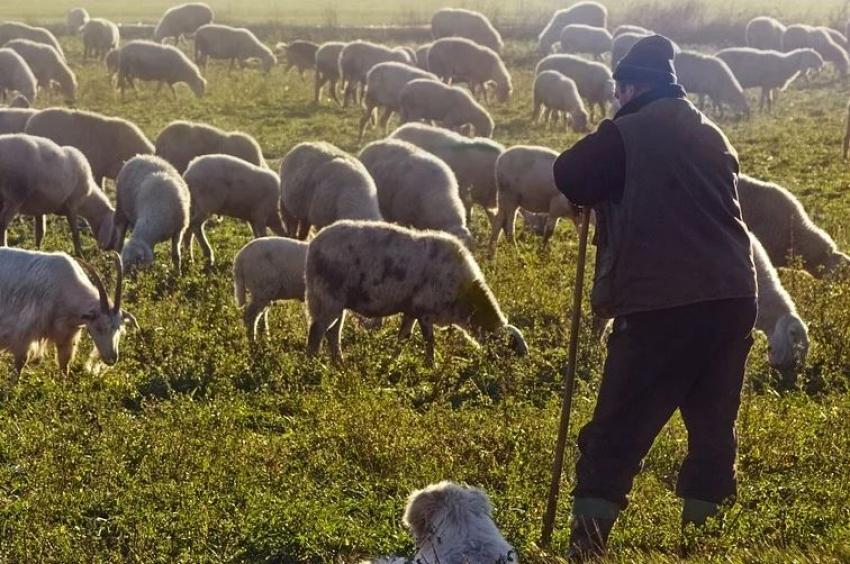 Επιτέλους η κυβέρνηση να αφουγκραστεί τα σοβαρά προβλήματα των κτηνοτρόφων